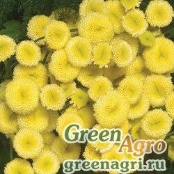 """Пиретрум (пижма) девичий (Tanacetum parthenium) """"Vegmo"""" (sunny ball gold) pelleted 1000 шт."""