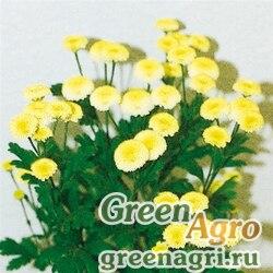 """Пиретрум (пижма) девичий (Tanacetum parthenium) """"Vegmo"""" (yellow) pelleted 1000 шт."""