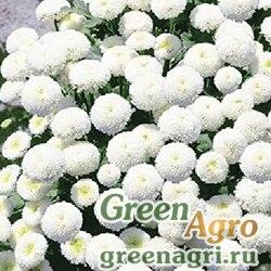"Пиретрум девичий (Chrysanthemum parthenium) ""Snowball"" (white) 10 гр."