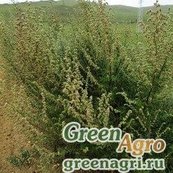 Полынь манчжурская (Artemisia mandshurica) гр 2 гр.