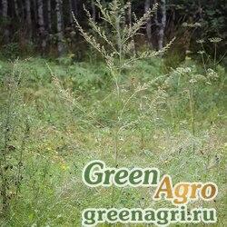 Полынь обыкновенная (Artemisia vulgaris) гр 25 гр.