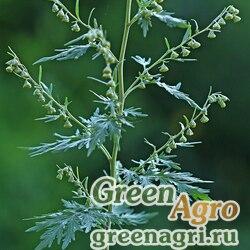 Полынь Сиверса (Artemisia sieversi) 2 гр.