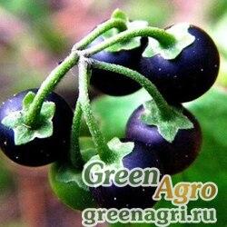 Паслен черный (Solanum nigrum) 20 г