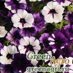 "Петуния ампельная гибридная (Petunia x hybrida) ""Shock Wave F1"" (purple tie-dye) pelleted 100 шт."