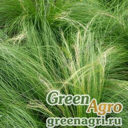 "Ковыль тончайший (Stipa tenuissima) ""Pony Tails"" (green) multi-pelleted 100 шт."
