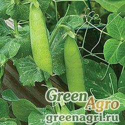 Горох овощной Кельведонское чудо(продается на вес)