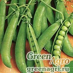 Горох овощной Амброзия(продается на вес)