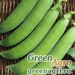 Горох овощной Калипсо(продается на вес)
