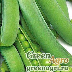 Горох овощной Юрга(продается на вес)