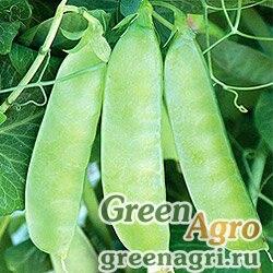 Горох овощной Каскад(продается на вес)