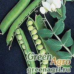 Горох овощной Воронежский зеленый(продается на вес)
