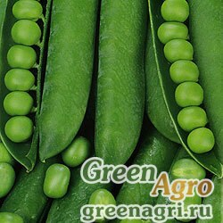 Горох овощной Адагумский(продается на вес)