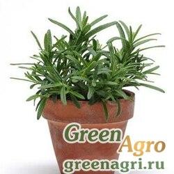 """Розмарин лекарственный (Rosmarinus officinalis) """"Rosemary"""" multi-pelleted 1000 шт."""
