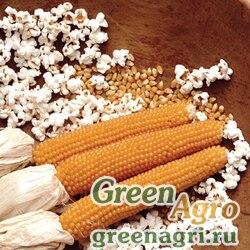 Кукуруза Попкорн  (упак-50 гр.)