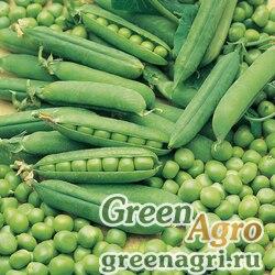 Горох овощной Вега кг (продается на вес)