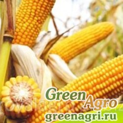 Семена Кукуруза, Веритис, 1 п.е., Euralis