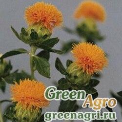 Сафлор красильный (Carthamus tinctorius) (orange) гр 50 гр.