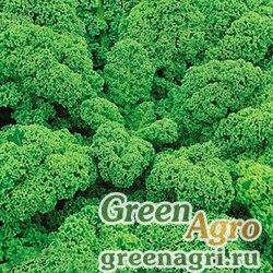 Капуста листовая Зеленое кружево (1уп-500шт)