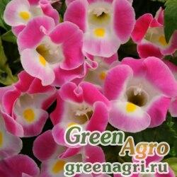 "Торения Фурнье (Torenia fournieri) ""Kauai F1"" (rose) pelleted 1000 шт."