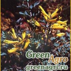 Хохлатка Вилсона (Corydalis wilsonii) 0,5 гр.