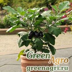 "Баклажан (Solanum melongena) ""Patio Baby F1"" raw 100 шт."