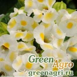 "Торения Фурнье (Torenia fournieri) ""Kauai F1"" (lemon drop) pelleted 1000 шт."