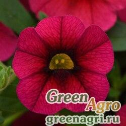 """Калибрахоа гибридная ампельная (Calibrachoa hybrida) """"Kabloom"""" (cherry) precision Multi-pelleted 100 шт."""