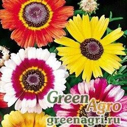 "Хризантема килеватая (Chrysanthemum carinatum) ""Dunnetti"" (mix) 50 гр."