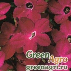"Табак крылатый (Nicotiana alata) ""Saratoga F1"" (deep rose) raw Произв. 1000 шт."