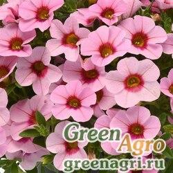 "Калибрахоа гибридная ампельная (Calibrachoa hybrida) ""Kabloom"" (pink light blast) pelleted 100 шт."