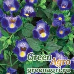 "Торения Фурнье (Torenia fournieri) ""Kauai F1"" (deep blue) pelleted 1000 шт."