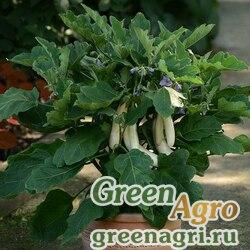"Баклажан (Solanum melongena) ""Gretel F!"" raw 100 шт."