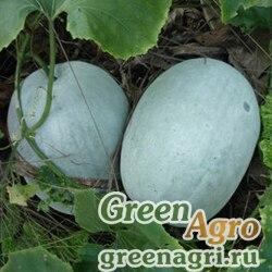 Тыква восковая (Benincasa hispida) 2.6 гр.