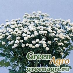 """Пиретрум девичий (Tanacetum parthenium) """"Crown"""" (white) pelleted 1000 шт."""