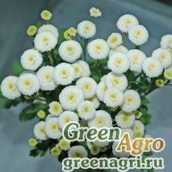 """Пиретрум девичий (Tanacetum parthenium) """"Baya"""" (white) pelleted 1000 шт."""
