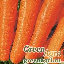 Морковь Вита Лонга (упак-50 гр.)