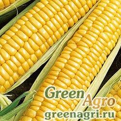 Кукуруза Золотой батам (упак-50 гр.)