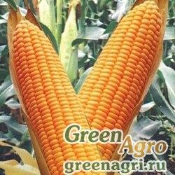 Кукуруза Аурика F1 (Весовые семена)