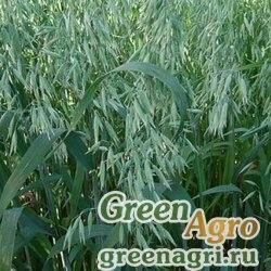 Сидераты Вико-овсянная смесь 30/70 1 кг  Зеленый уголок