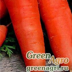 Морковь Шантенэ 2461 (упак-50 гр.)