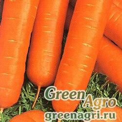 Морковь Осенний король (упак-50 гр.)