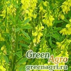 Донник желтый 0,5 кг Зеленый уголок (20 шт)