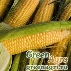Кукуруза Сластена (упак-50 гр.)