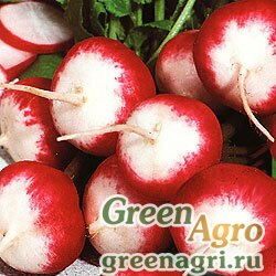 Семена Редис Розово-красный с белым кончиком (упак-50 гр.)