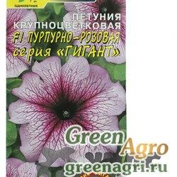 Петуния Гигант Пурпурно-розов Цвет Сад Ц