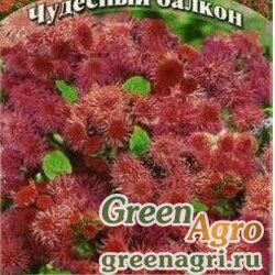 Агератум Калинка  Гавриш Ц