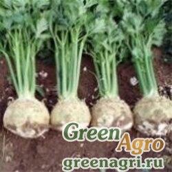 Сельдерей Апполо (корневой) 10 гр. Wing Seed