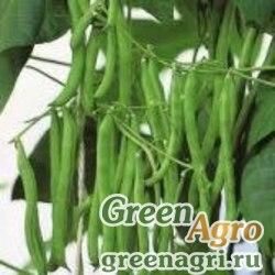 Фасоль Ws 859 * (Паулиста) 1000 гр. Wing Seed