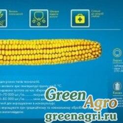 Семена Кукуруза, ДКС 3203, 1 п.е., Monsanto