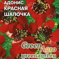 Адонис Красная шапочка Седек Ц